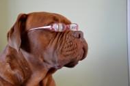 戴眼镜的时尚狗狗图片(5张)