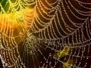 沾满露珠的蜘蛛网图片(14张)