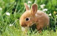 可爱的棕色兔子图片(20张)