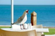 可爱的鸽子图片(12张)