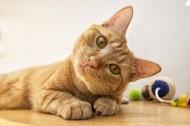 可爱的小猫图片(17张)