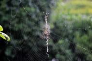 蜘蛛图片(5张)