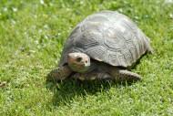 爬行的乌龟图片(12张)