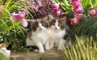 可爱猫咪图片(20张)