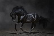 黑色骏马图片(8张)