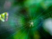 正在结网的蜘蛛图片(7张)