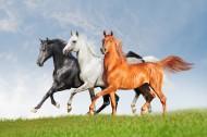 奔跑的骏马图片(8张)