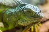 蜥蜴图片(8张)
