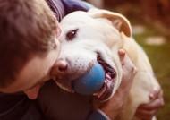 咬着球的宠物狗图片(6张)