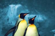 可爱企鹅图片(3张)