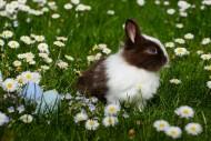 可爱的兔子图片(10张)