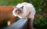 栅栏上的猫图片(6张)