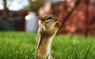 毛茸茸的仓鼠图片(12张)