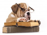 充满创意的宠物狗狗图片(24张)