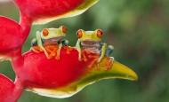 活蹦乱跳的青蛙图片(15张)