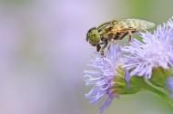 果蝇图片(6张)