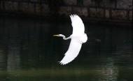 白鹭图片(17张)
