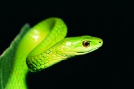 蛇图片(27张)
