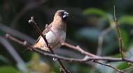 斑纹鸟图片(10张)