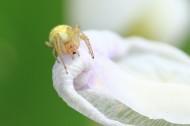 微距蜘蛛图片(6张)