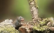 可爱的小老鼠图片(11张)