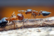 微距蚂蚁图片(11张)