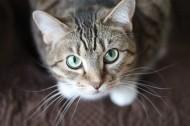 睁大双眼的小猫图片(11张)