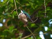 鸟窝里的雏鸟图片(12张)