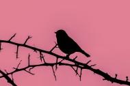 树枝上的麻雀剪影图片(18张)