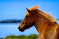 健壮的骏马图片(10张)