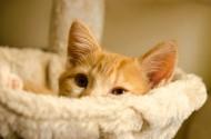 一只可爱的小猫图片(12张)