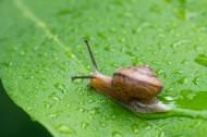 爬行的蜗牛图片(9张)