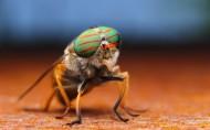 苍蝇图片(10张)