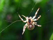 一只蜘蛛高清图片(14张)