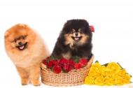 可爱的宠物狗图片(9张)