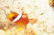 海底海藻图片(48张)