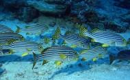 海底鱼群图片(31张)