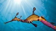 海底世界海洋生物图片(10张)