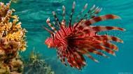 可爱热带鱼图片(8张)