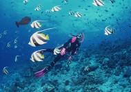 海底潜水图片(44张)
