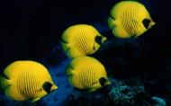 海底世界图片(20张)