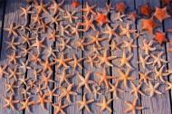 美丽的海星图片(18张)