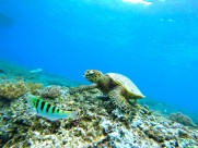 寿命较长的海龟图片(10张)