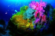 深海潜水图片(57张)