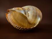 形状各异的海螺图片(10张)