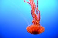 水母图片(20张)