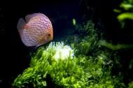 水族馆里的水生动植物图片(11张)