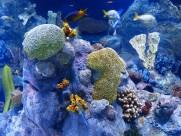 水族馆水生动物图片(14张)