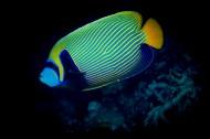 色彩鲜艳的热带海洋鱼图片(15张)