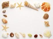 贝壳和海螺图片(47张)